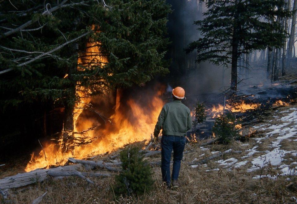 Image de feu de forêt Image parskeeze de Pixabay